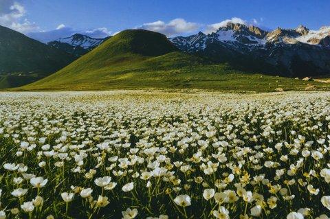 Pistes en fleurs l'été